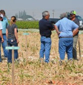 Idaho-Oregon Seed Trials