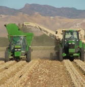 Good quality, active markets as Western Onion heads into new season