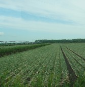 Crop News for August 18