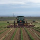 Market and Crop Update for March 23