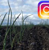 Instagram Photo Posts of the Week