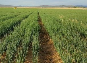 Market and Crop Update for May 18
