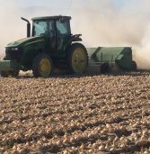 Video of the Week – Arvin, CA Onion Harvest