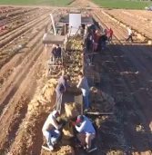 Video of the Week – Arizona Harvest