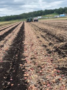 Market and Crop Update for September 5, 2019 – Onion Business